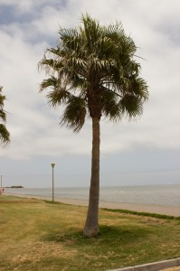 Palme in Walvis Bay